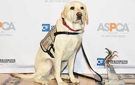George H.W. Bush's Service Dog Sully Receives Public Service Award for Bringing Love and Joy